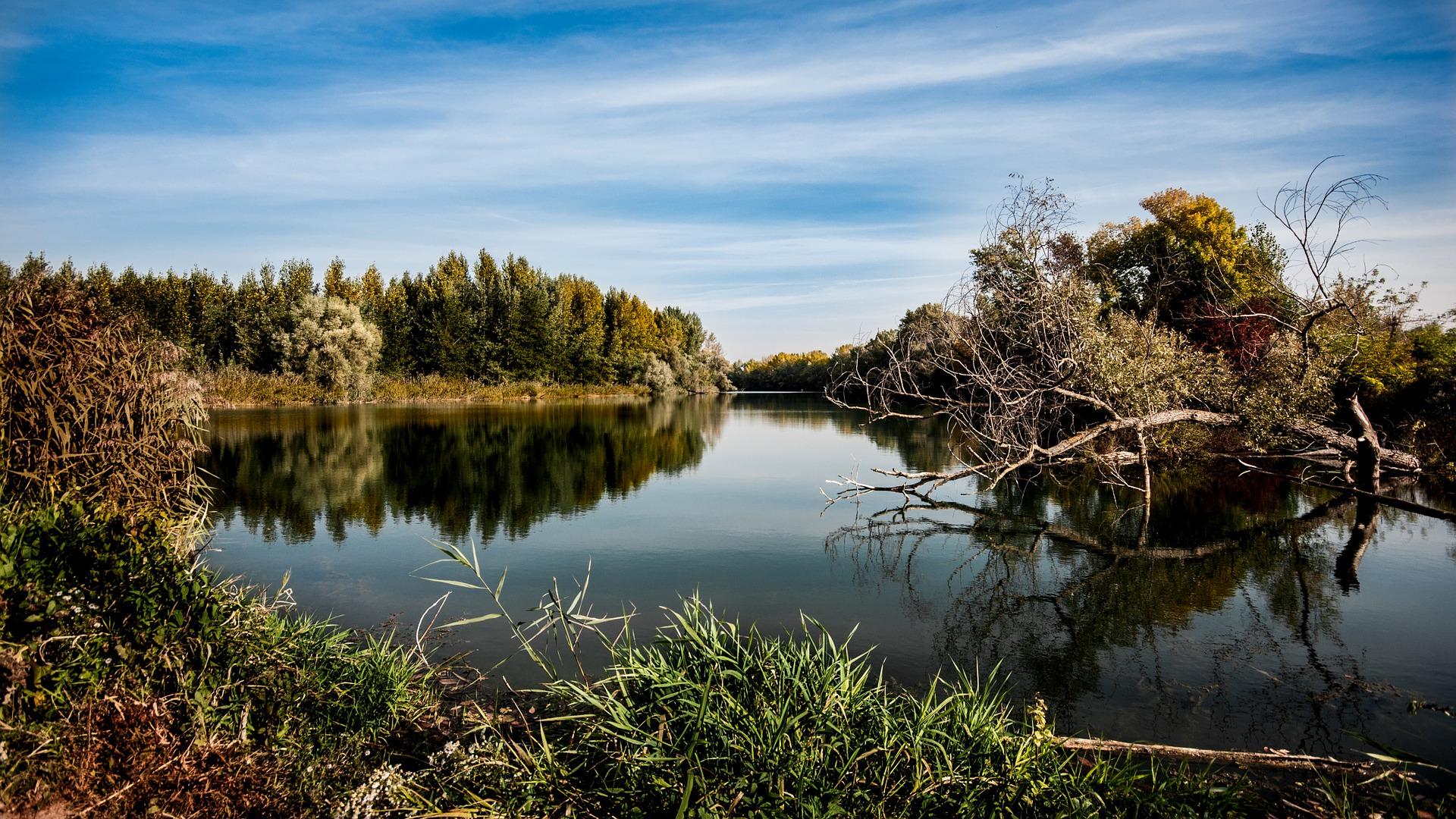 Naturbild med sjö och träd
